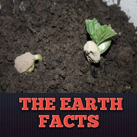 The earth facts Gardening