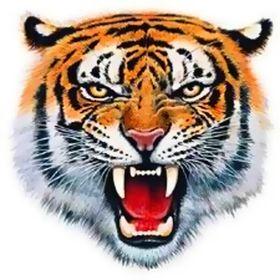 Celtic Tiger Manufacturer HHO KIT for Cars