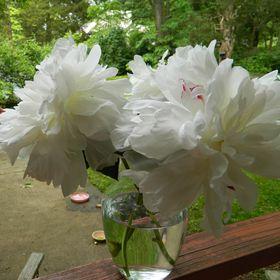 Silver Tulip Florist