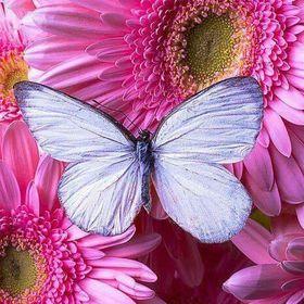 Virág Gabriella