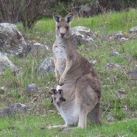 Kangaroo Kids Designs