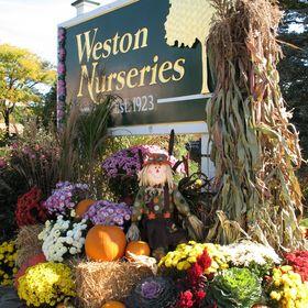 Weston Nurseries Westonnurseries On Pinterest