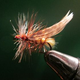 Call of the Wild Flies