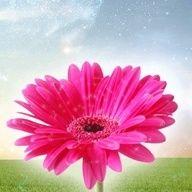 pinkgrl27