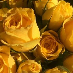 Large Weekender Carry-on Ambesonne Floral Gym Bag Blooming Flowers Petals