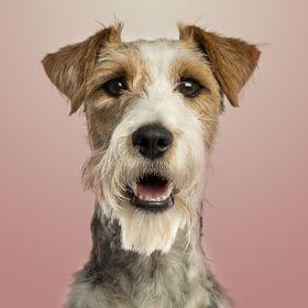 The Doggie Magazine