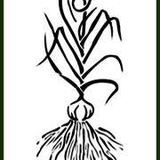 Filaree Garlic Farm