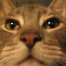 Amber Gincerowski Yankeegirl1842 Profile Pinterest