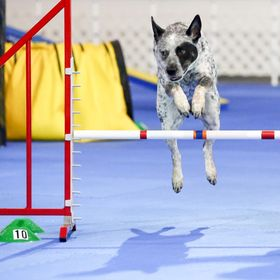 EMMCO SPORT Dog Agility & Canine Conditioning Equipment