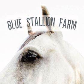 Blue Stallion Farm