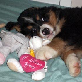 Most Inspiring Cuby Chubby Adorable Dog - 9f618ce5ce1ea8a1a4d0a24f1603dfa9  Pic_205035  .jpg