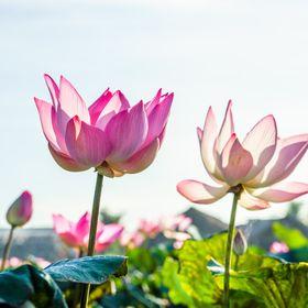 Lotus Rejser ApS
