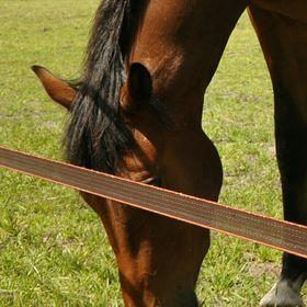 wasabie paardje