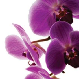 Orchid Events - Event and Wedding Planning Halifax, NS