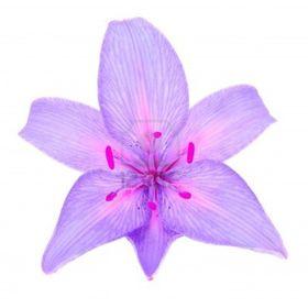 Lily Violette
