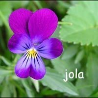 Jola Bo