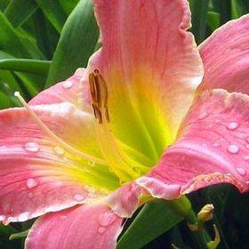 Amador Flower Farm & Nursery