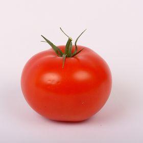 Tomato's Vine