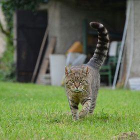 Klára Macáková