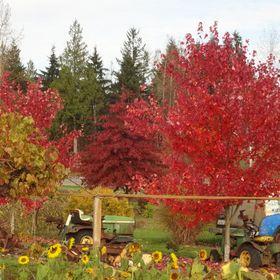 Henry's Plant Farm