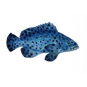 FISHING ARTWORKS
