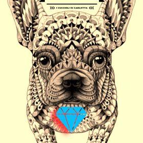 Bulldog Francese Celebrity