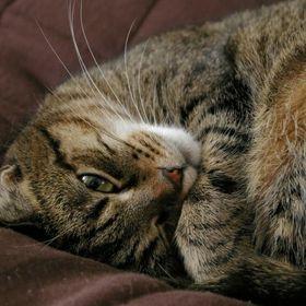 Kleo The Cat