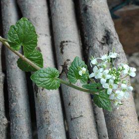 Sage Garden Herbs