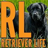 Retriever Life It's More Than A Game Of Fetch!