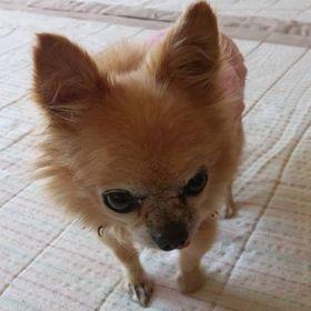 Large Weekender Carry-on Grunge Sketch Dog Art Ambesonne Animal Gym Bag
