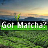 Got Matcha Premium Tea Co. LLC