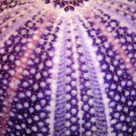 Australian Seashells