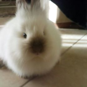 OMG!A bunny