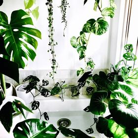 HOUSE PLANT STORE | Plant Care For Beginners