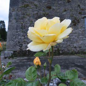 In My Ireland