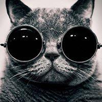 Gas_Cat
