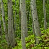 Fundacja Polska w Lesie