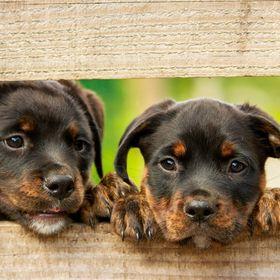 Singular Pets