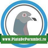 PiataDePorumbei. ro