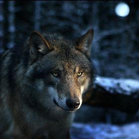 Wolfing Core