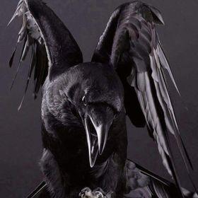 Valkryie Raven