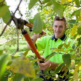 Danbury Tree Pros