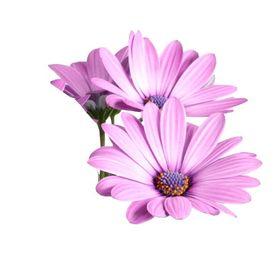 Virágbarát Webáruház