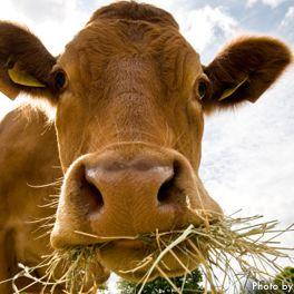 Big Horn Ranch Grassfed CSA