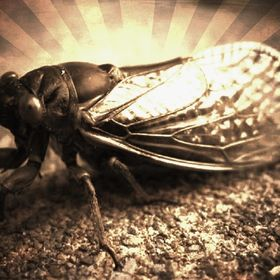 Rusted Cicada