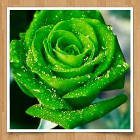 ThegreenFlowers