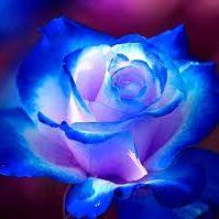 rosario araque