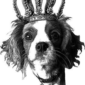 Gorgeous George Dog Grooming