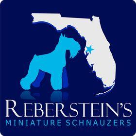 Reberstein's Miniature Schnauzers