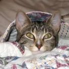 Kitten Stanley